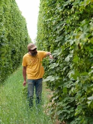 Rogue Brewmaster John Maier walks through the Rogue Farms hop fields.
